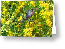 Wheel Bug  Greeting Card