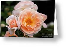 Wheeping Rose Greeting Card