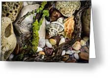 Whelk Vi Greeting Card