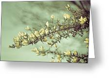 When Gorse Flowers Sing Their Melody Greeting Card