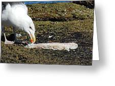 Where Did The Seagull Get The Fillet Greeting Card