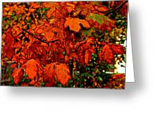 Where Has All The Red Gone - Autumn Leaves - Orange Greeting Card
