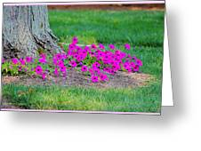 Where Petunia Grows Greeting Card