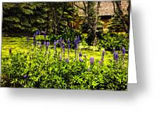 Where The Lupines Grow Greeting Card