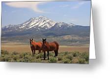 Where The Mustangs Roam Greeting Card