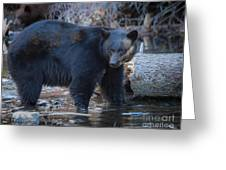 Where's That Cub? Greeting Card