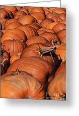Which One Is The Great Pumpkin Greeting Card