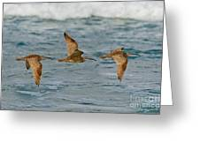 Whimbrel Trio In Flight Greeting Card