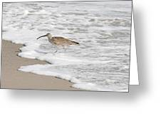 Whimbrel Wading Greeting Card
