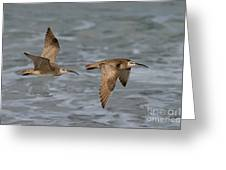 Whimbrels Flying Above Beach Greeting Card