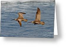 Whimbrels Flying Close Greeting Card