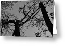Silhouette Trees Greeting Card
