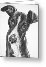 Whippet Black And White Greeting Card