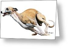 Whippet In The Wind Greeting Card