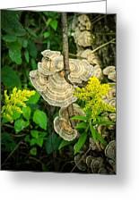 Whirled Turkey Fungus Greeting Card