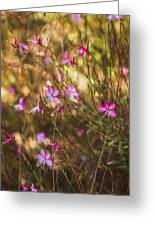 Whirling Butterfly Bush Greeting Card