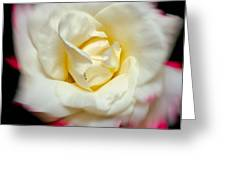 Whirling Rose Greeting Card