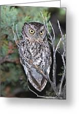 Whiskered Screech Owl Greeting Card
