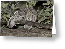Whiskered Screech Owls Greeting Card