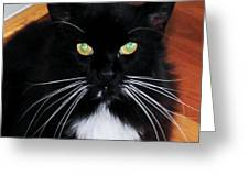 Whiskers Greeting Card by Lorraine Louwerse