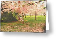 Whispering Cherry Blossoms Greeting Card