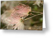 Whispering Pink Greeting Card
