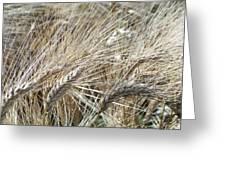 Whispering Wheat Greeting Card
