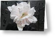 White And Black Art Greeting Card