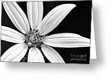 White And Black Flower Close Up Greeting Card
