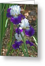 White And Blue Iris Stalks At Boyce Thompson Arboretum Greeting Card
