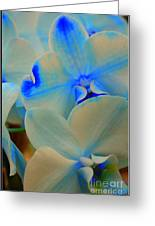 White And Blue Orchid Greeting Card
