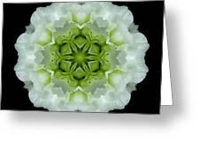 White And Green Begonia Flower Mandala Greeting Card
