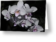 White And Pale Pink Phalaenopsis  165 Greeting Card