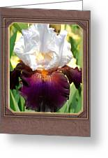 White And Purple Iris Greeting Card