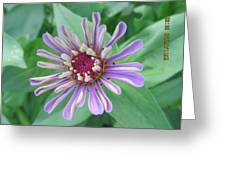 White And Purple Spiky Petals Greeting Card