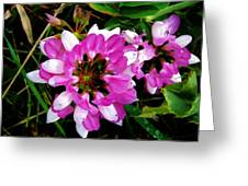 White And Purple Wildflower Greeting Card