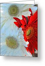 White And Red Flowers Greeting Card