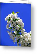 White And Wonderful Greeting Card by Elizabeth Dow