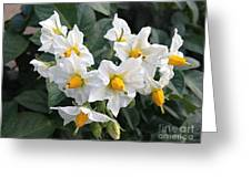 Garden Blossoms White And Yellow Garden Blossoms Greeting Card