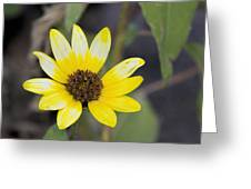 White And Yellow Sunflower Greeting Card