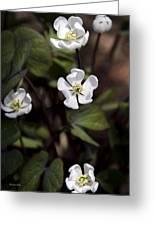 White Anemone Flowers Greeting Card