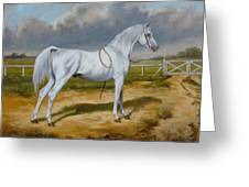 White Arabian Stallion Greeting Card
