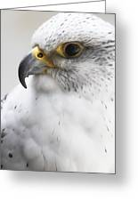 White Arctic Falcon Greeting Card