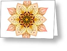 Asiatic Lily II Flower Mandala White Greeting Card