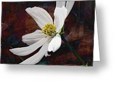 White Aster Study Iv - Titled Greeting Card