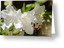 White Azalea With Friend Greeting Card