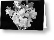 White Azaleas On Black Greeting Card