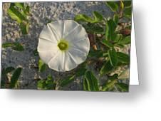 White Beach Flower Greeting Card