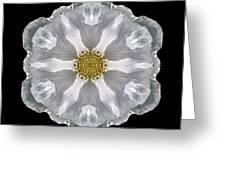 White Beach Rose IIi Flower Mandala Greeting Card
