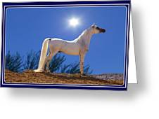 White Beauty Under The Moonlight Greeting Card